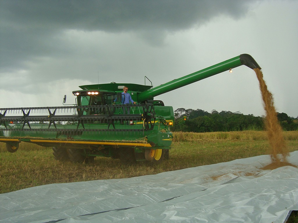 Emptying first grain tank of rice