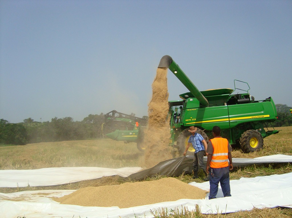 Emptying a full grain tank of rice in Liberia