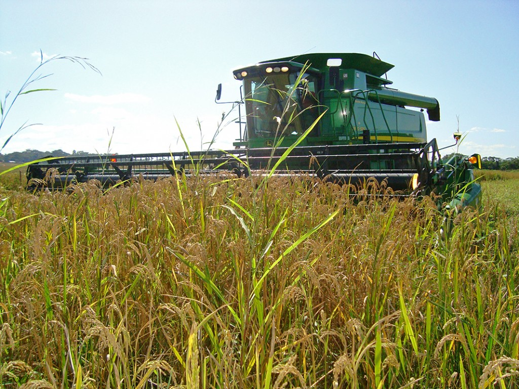 PR photo of combine in rice field