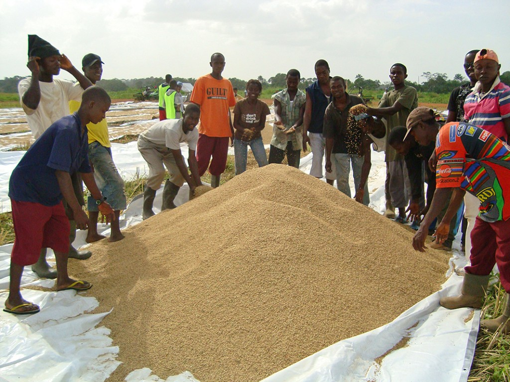 Workers by rice pile in Liberia